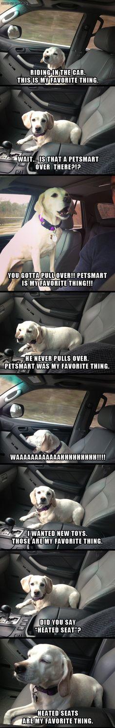 crazy dog... haha