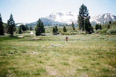 Mammoth Mountain Meadow