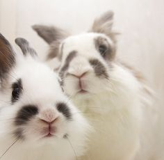 related bunnies??