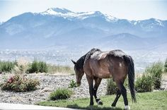 Home means Nevada. Photo by Jason Elia. #renolens #thisisreno