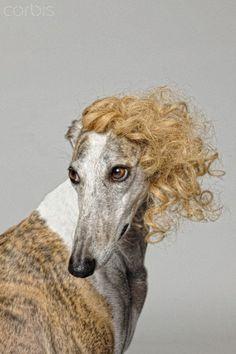 Dog hair.