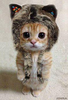 Kitten wearing a kitten hat!