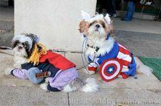 doggy avengers! #Avengers avengers-assemble-fun Too cute!