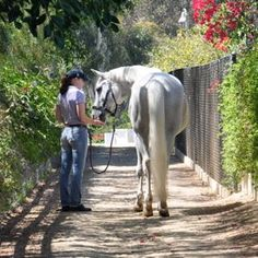 How to find a job in the horse industry!   http://www.proequinegrooms.com/index.php/blog/my-blog/places-to-network-to-find-a-grooming-job-besides-here/.   This is neat, I haven't thought of some of these ideas