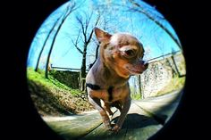 fish eye experiment
