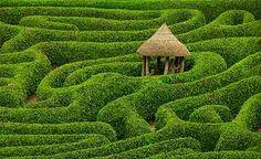 Cape Floral Kingdom england, national geographic, green, laurel maze, gardens, national trust, place, glendurgan garden, cornwall