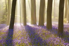 Hampshire, England