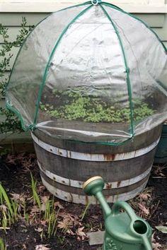 Umbrella Green house - I love this idea!