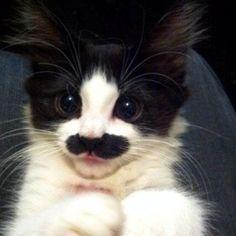 mustache kitty hihihi
