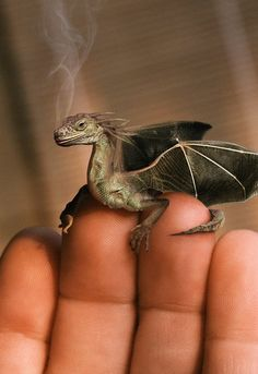 The tiny dragons, adopted as familiars by witches and humans with powers, a cousin to the fearsome, giant dragons . . .  --EDK.