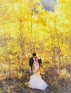 pretty amazing Aspen Fall yellow trees
