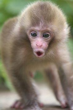 Saucy baby? by Masashi Mochida - snow monkey