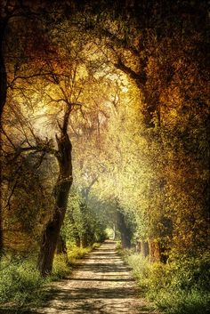 Gorgeous country road...