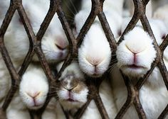 bunny noses!!!! luv luv luv :)