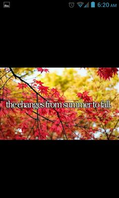 Just girly things fall