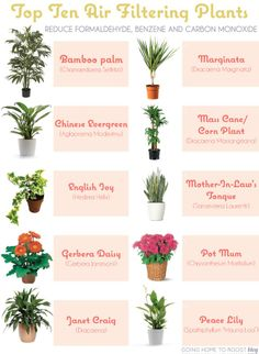 Top 10 Air Filtering Plants  Love the look of the bamboo palm!!