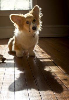 fluffy shadow