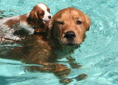 two friends in the pool