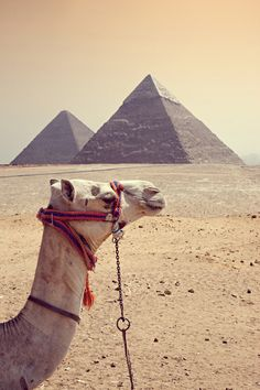 I have been obsessed with Egyptian history for years. I actually minored in history just so I could take all the Egyptian history classes offered by Clemson. One of these days I intend to visit!