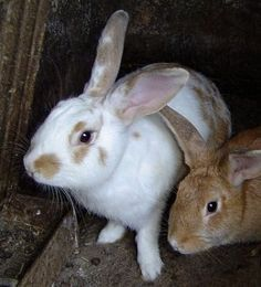 How to purchase #rabbit #Hutches http://jaxonparker83.hubpages.com/hub/Tips-to-purchase-Rabbit-Hutches