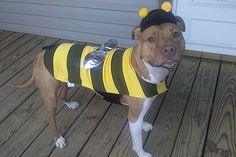 A Life-Changing Pit Bull - Bean the therapy dog is helping children learn to read, changing perceptions about pit bulls and changing her family's life forever bumbl bee, anim, therapy dogs, pit bulls, children pictures, puppi, poppi, pitbul dog, bumble bees