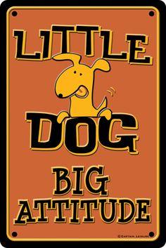 little dogs, jackrussel