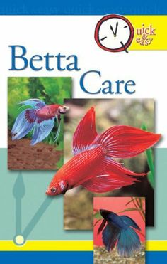 Quick & Easy Betta Care (Quick and Easy) by Pet Experts at TFH, http://www.amazon.com/dp/B005H3GIH4/ref=cm_sw_r_pi_dp_wJdGsb06MPG35