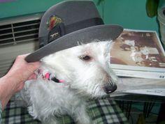 Eileen Wall's dog, Mr. Twinkle Star.