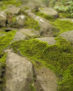 My house will most definitely have a moss garden - few things are as beautiful.