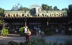 Animal Kingdom Tips   My best advice for visiting