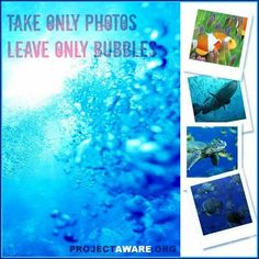 Tip 3: Take Only Photos – Leave Only Bubbles #10Tips4Divers to Protect the Ocean Planet #ProjectAWARE