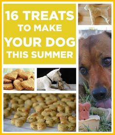 Projects & More - 16 Treats You Should Make For Your Dog This Summer