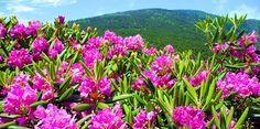 Roan Mountain, North Carolina & Tennessee