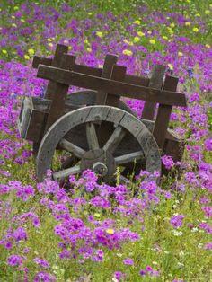 Wooden Cart in Field of Phlox, Blue Bonnets, and Oak Trees, Devine, Texas by Darrell Gulin