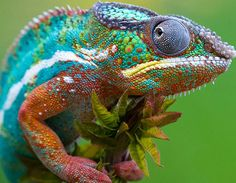 animals, lizard, god, chameleons, picture quotes, animal photography, spring colors, rainbows, color trends