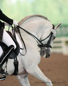 Andalusian horse stallion PRE