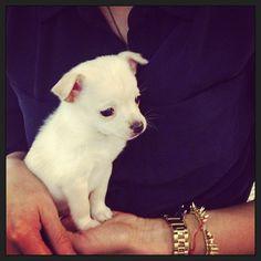Small puppy + Stella & Dot jewels = BIG smile