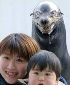 creepy! seals, asian foods, laugh, the zoo, family photos, funni, sea lions, bomb, sea world