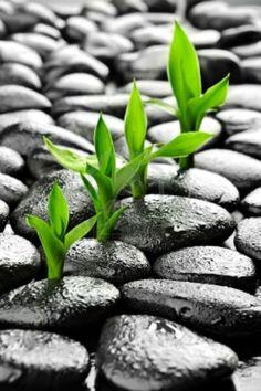 plant, green, new life, color splash, zen, stone, beauti, garden, color photography
