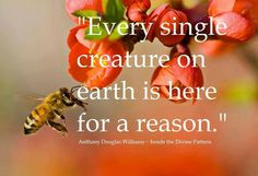 """Every single creature on Earth is here for a reason."" ~ Anthony Douglas Williams"