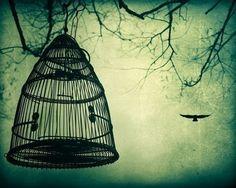 (via reservoirdebonheurs)  caged bird flies…