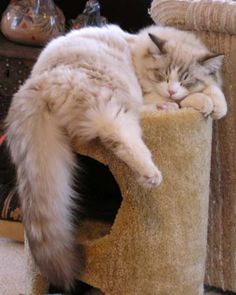 """Another cat from Crack O"""" Noon."""