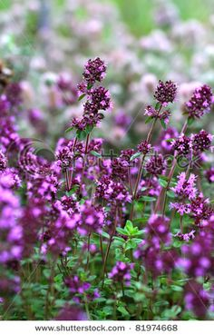 flower oragano, flower oregano, bouquet idea, septemb 2014, real food