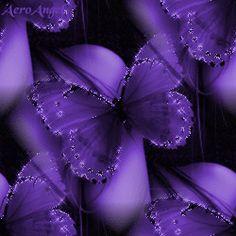 Purple Butterflies,Animated - butterflies Photo