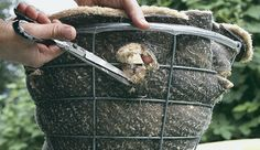 The right way to make a hanging basket
