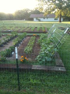 Climbing Cucumbers, Beans and Peppers.  Corn in the distant bed. I LOVE this set up! distant bed, food garden, garden idea, garden 2012