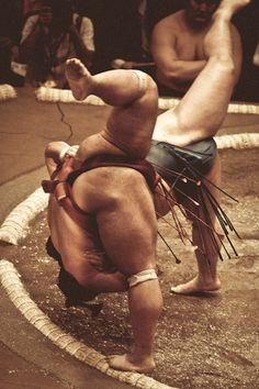 deportes ... Art of Sumo by Tomoki Momozono