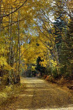 Fall in Taos