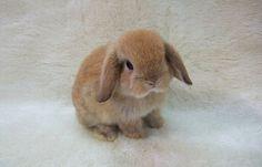 Baby bunnies make me smile!