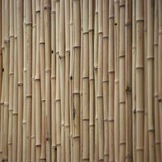 bamboo, beige